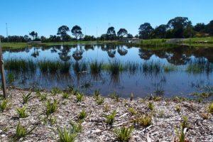 Lyneham Dickson Wetlands1